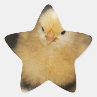 Fluffy Yellow Baby Chick Star Sticker