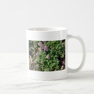 Flujo pálido rosado del Corydalis Corydalis Sempe Tazas De Café