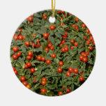 Flujo rojo de Pseudocapsicum de la solanácea (cere Ornamentos De Navidad