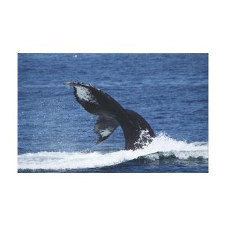 Fluking Humpback Whale tail wrapped canvas print