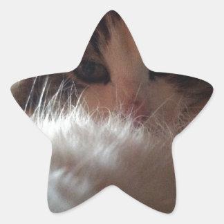 Flumi the Cat Star Sticker
