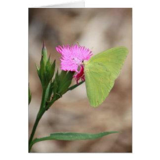 Fluorescent butterfly notecard card