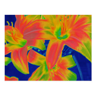 fluorescent flowers postcard