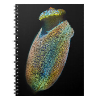 Fluorescent plant seed under microscope notebook