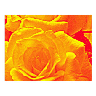 fluorescent rose orange postcard