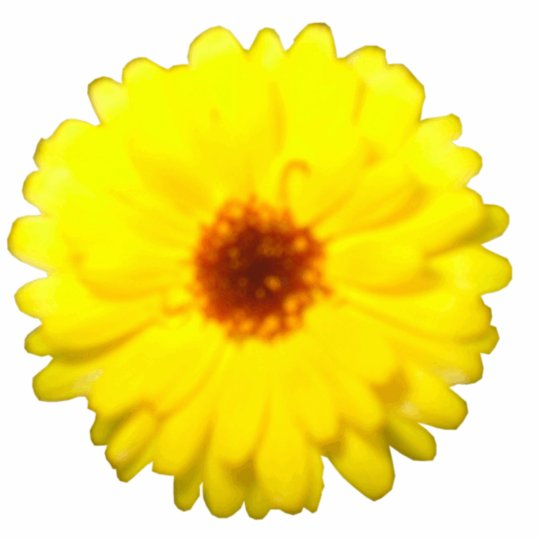 Fluorescent Yellow Marigold Photo Sculpture
