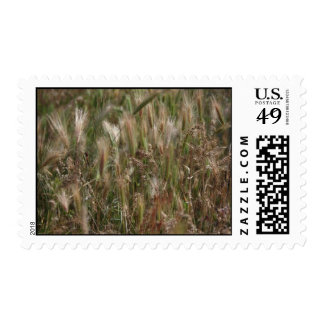 Flurry of grasses stamp