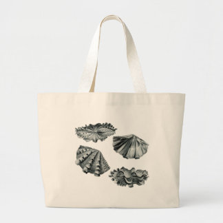 Fluted Giant Clam Bag