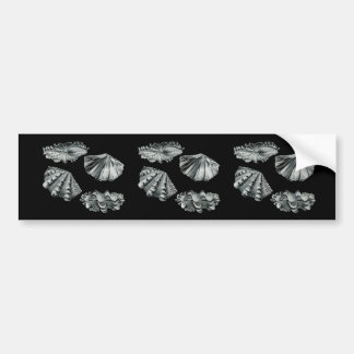 Fluted Giant Clam Car Bumper Sticker
