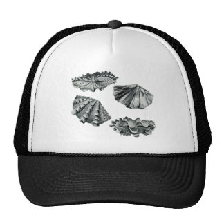 Fluted Giant Clam Trucker Hat