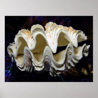 Fluted Giant Clam Shell ~ tridacna squamosa Print