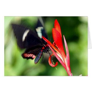 Flutterby Butterfly Card