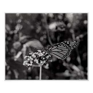 Flutterby Impresiones