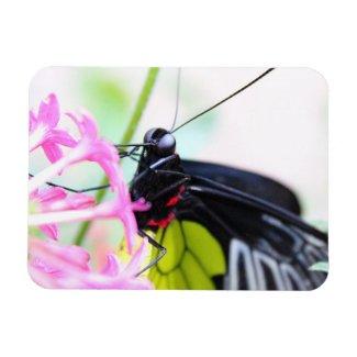 Fluttering Butterfly Magnet