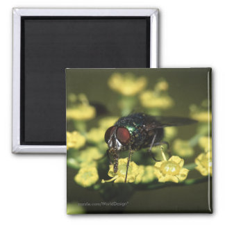 Fly 2 Inch Square Magnet