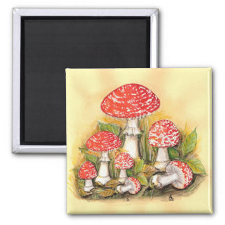 Fly Agaric Collection 2 Inch Square Magnet