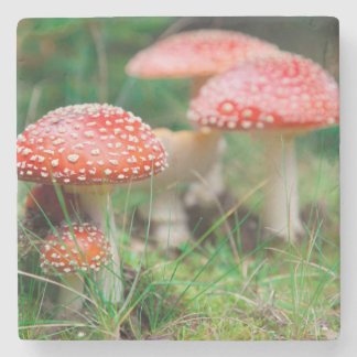 Fly-Agaric In A Forest, Closeup Photo Stone Beverage Coaster