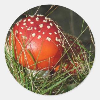 Fly Agaric Mushroom stickers
