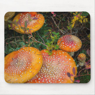 Fly agaric mushrooms at Mowich Lake Mouse Pad