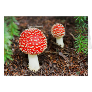 Fly agaric mushrooms card