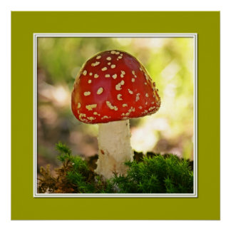 Fly agaric posters