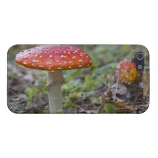 Fly Agaric Toadstool iPhone 5 Case