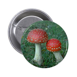 Fly agarics (Amanita muscaria) Pinback Buttons