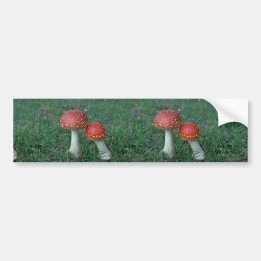 Fly agarics (Amanita muscaria) Car Bumper Sticker