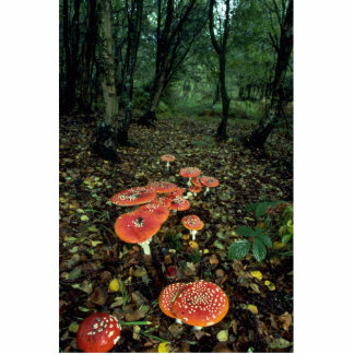 Fly agarics standing photo sculpture