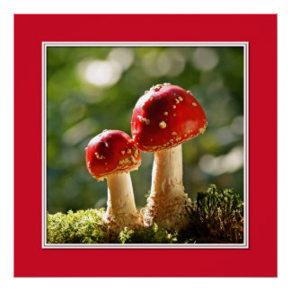 Fly agarics poster