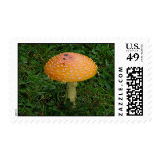 Fly Amanita Postage Stamps