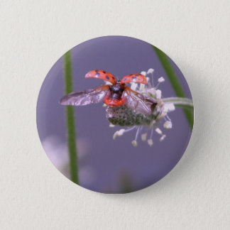 Fly away home button