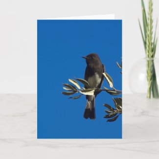 Fly Catcher Greeting Cards
