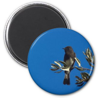 Fly Catcher Magnets