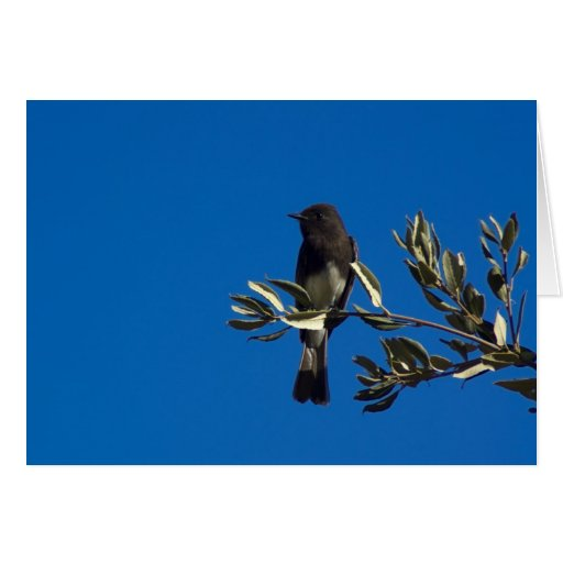 Fly Catcher Perched Card