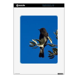 Fly Catcher Skins For Ipad