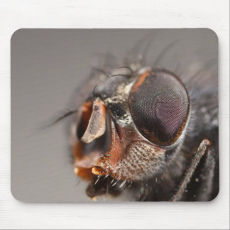 fly face mouse pad