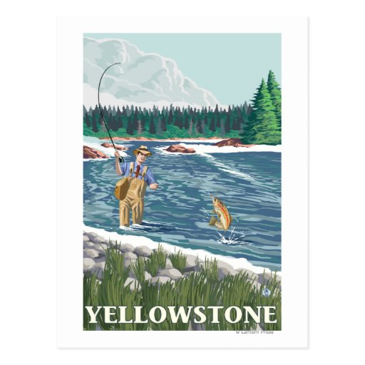 Fly Fisherman - Yellowstone National Park Post Cards
