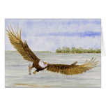 'Fly Fishing-Bald Eagle' Cards