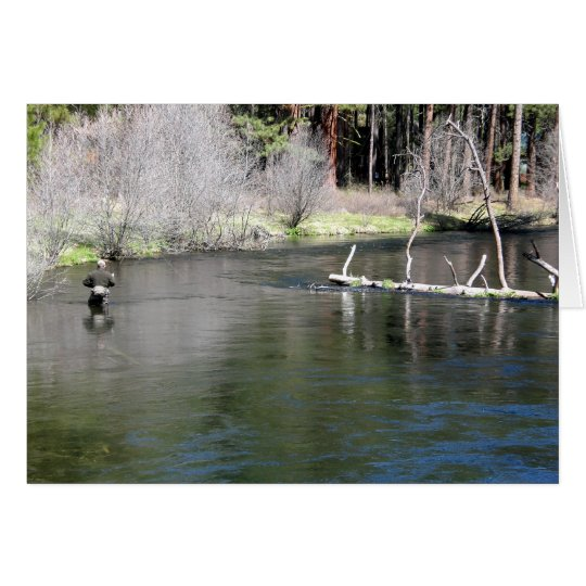 Fly Fishing on the Metolius Card