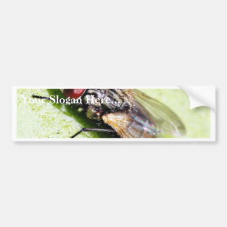 Fly Flies Insect Car Bumper Sticker