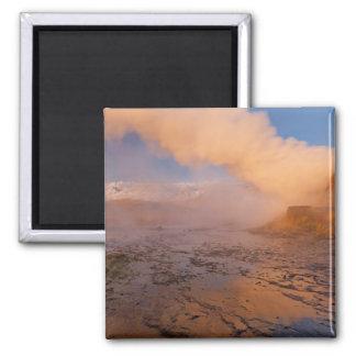 Fly Geyser in the Black Rock Desert Magnets