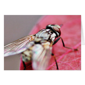 Fly Insect Card