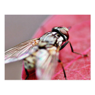 Fly Insect Postcard