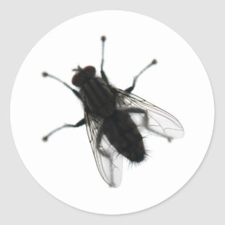 Fly insect classic round sticker