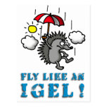 fly like at hedgehogs post cards