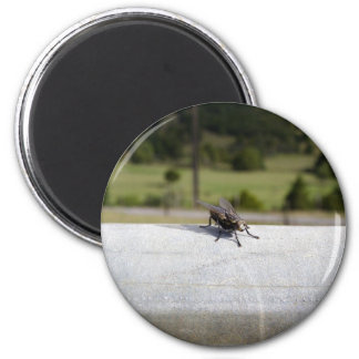 Fly On A Rail 2 Inch Round Magnet