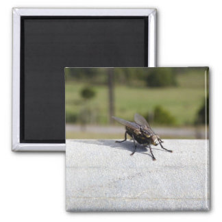 Fly On A Rail 2 Inch Square Magnet