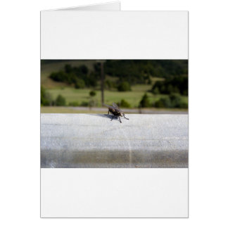 Fly On A Rail Card