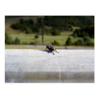 Fly On A Rail Postcard